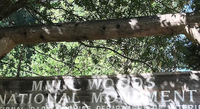Grossi visits Muirwoods